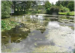 Pond algae and how to control algae for Farm pond maintenance
