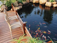 Keep your fish pond clean