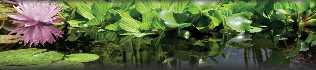 pond care main image